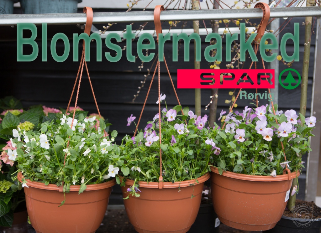 Stort blomstermarked hos Spar Rørvig